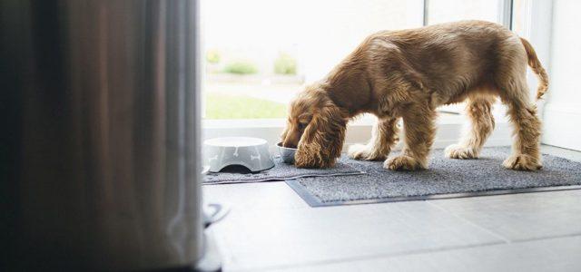 A kutyád aligha tud szólni, hogy gluténérzékeny