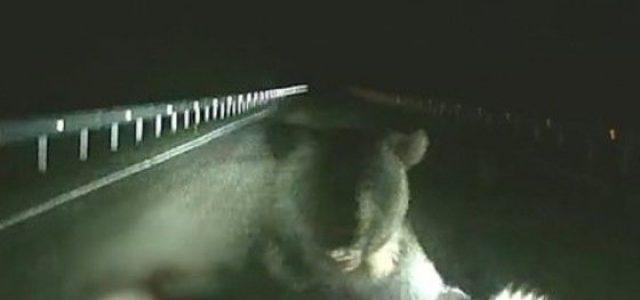 Úton haladó autóra támadt egy medve az orosz éjszakában