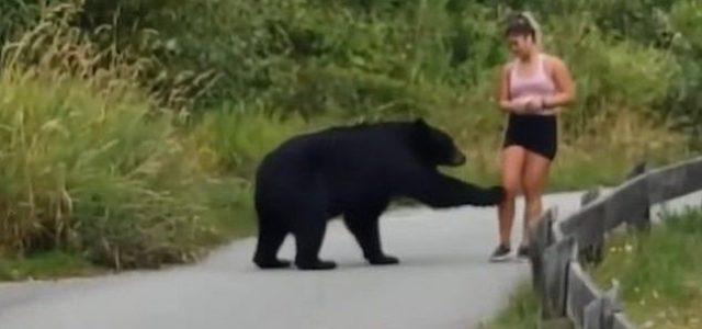Kocogni indult egy kanadai nő, aztán összefutott egy medvével – videó