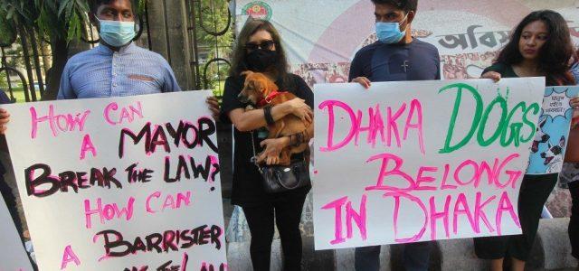 A tiltakozások ellenére kitelepítenek 30 ezer kóbor kutyát Banglades fővárosából