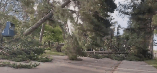 Videón, ahogy az orkánerejű szél szó szerint kicsavarja a földből a fákat Louisianában