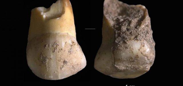 Egy neandervölgyi gyermek fogára bukkantak