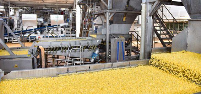 A kukorica útja a földekről a tányérig (x)