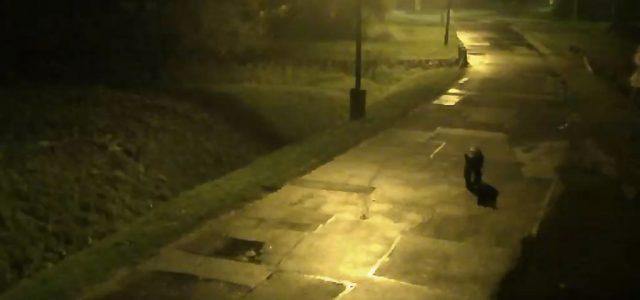 Videón a miskolci utcákon sétálgató medve
