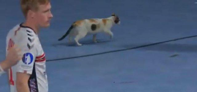 Egyiptom szent állata is belógott a kézilabda-világbajnokságra