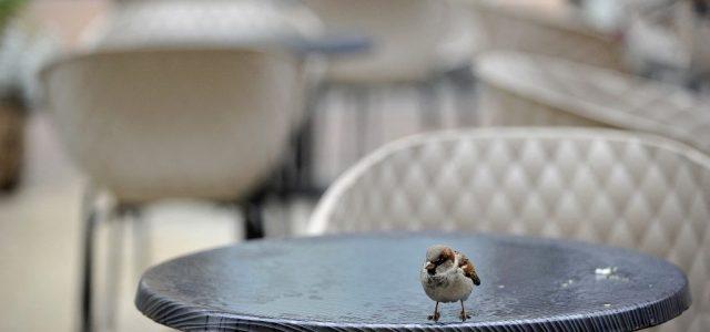 Horvátországban már ki lehet ülni a kávézók teraszára