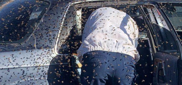 Vásárolni ment egy amerikai férfi, 15 ezer méh várta az autója hátsó ülésén, amikor visszatért