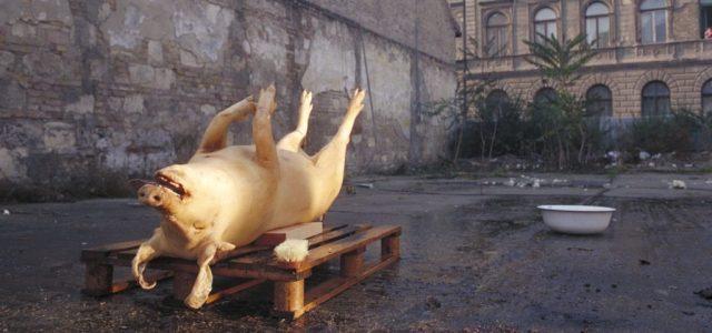Öt filmklasszikus Szomjas György életművéből