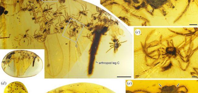 99 millió éves pókokra bukkantak egy borostyánban